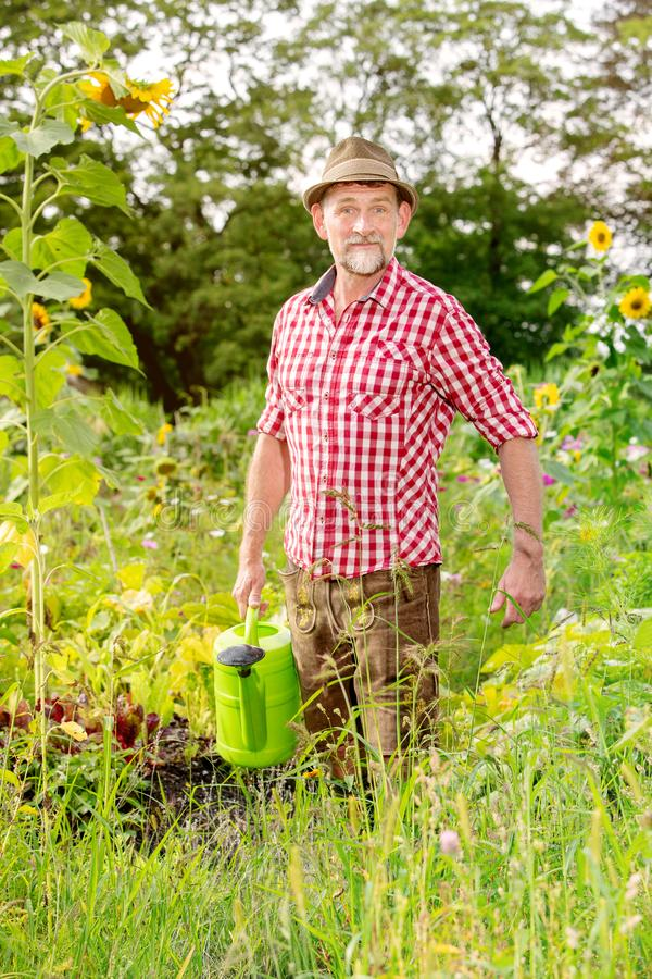 Handsome bavarian man standing in the garden and watering the flowers stock images