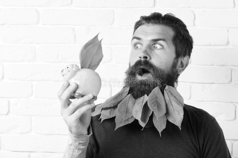 Handsome bearded man with stylish mustache and autumn yellow leaves in long beard on surprised face with pink piggy pig. Bank on white brick wall background stock photo
