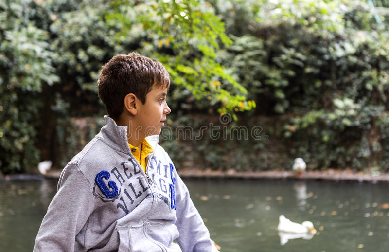 Handsome Boy Looking at Ducks stock photography