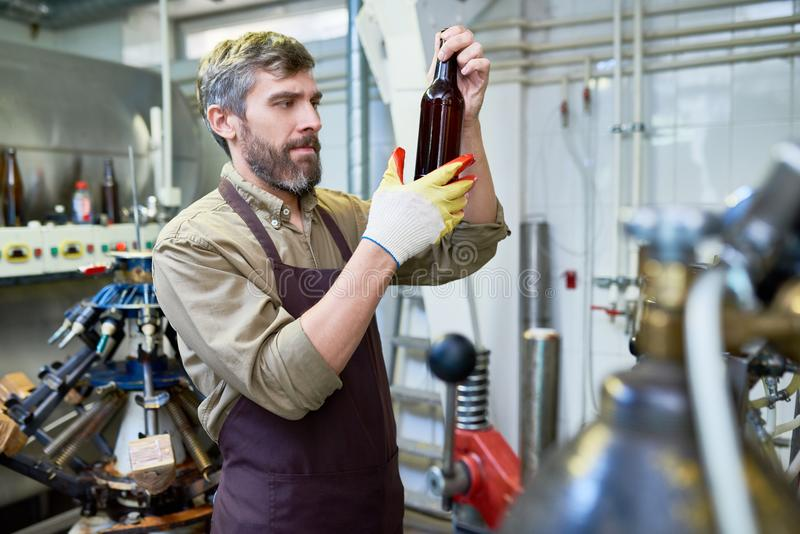 Handsome Brewer Carrying out Inspection. Hard-working middle-aged brewer wearing gloves and apron looking at beer bottle with concentration while carrying out stock photography