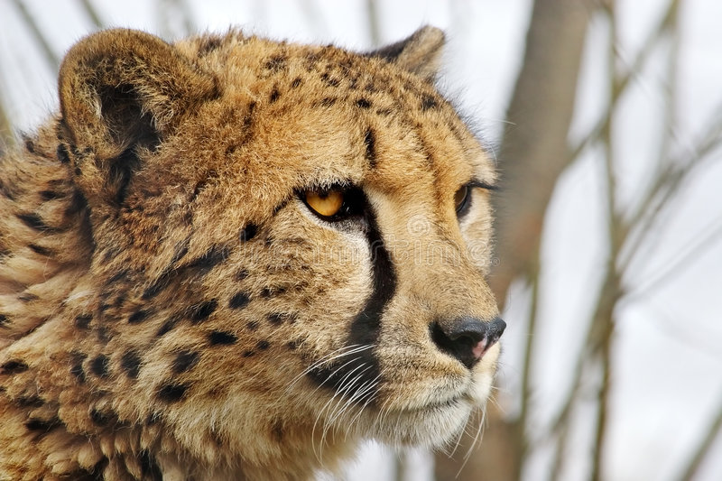 Handsome cat. Attentive sight of the young wild animal stock photos