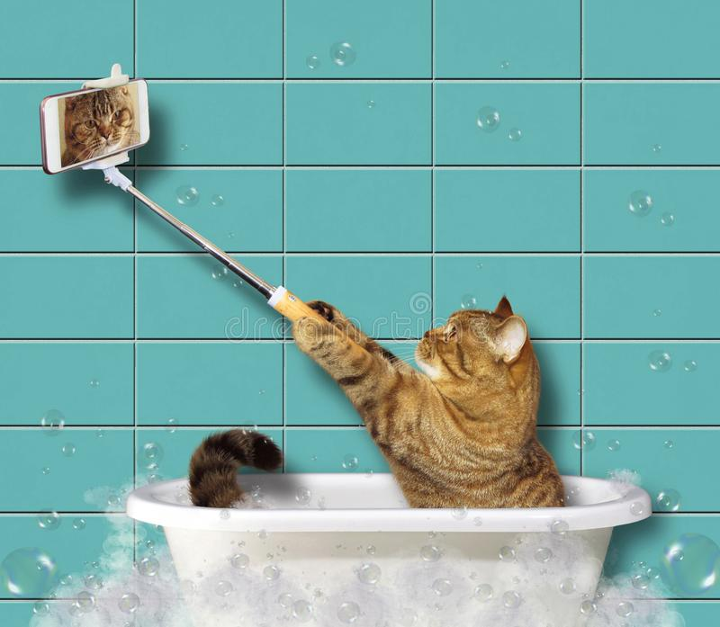 Cat with a phone in a bathroom stock image