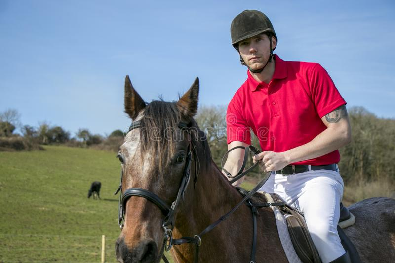 Handsome Male Horse Rider on horseback with white breeches, black boots and red polo shirt in green field with horses in distance. Handsome horse rider on stock images