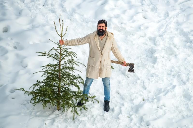 A handsome lumber with a beard carries a Christmas tree. Christmas lumberjack with axe and Christmas tree. Man is going stock photography