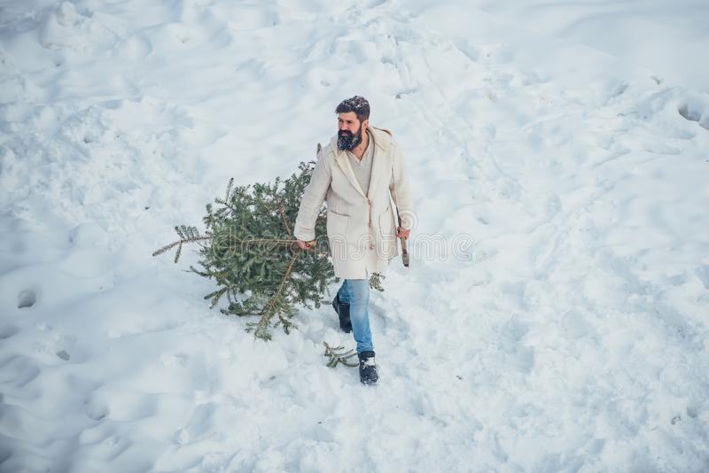 A handsome lumber with a beard carries a Christmas tree. Happy winter time. Man with beard bears home a Christmas tree. Young woodcutter winter portrait royalty free stock photos