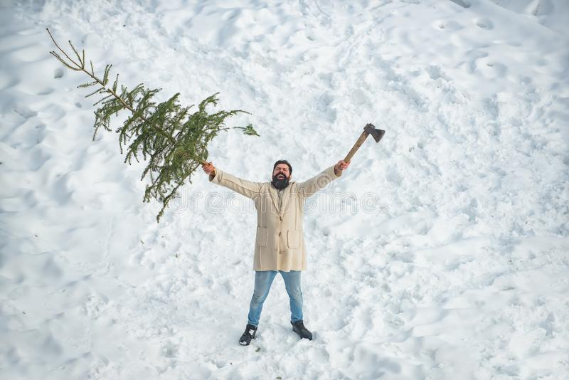 A handsome lumber with a beard carries a Christmas tree. Man is going to cut a Christmas tree. Santa Claus with. Christmas tree. Santa Claus with Christmas tree royalty free stock image