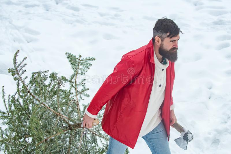 A handsome lumber with a beard carries a Christmas tree. Winter emotion. Young man lumberjack is cutting Christmas tree. In the wood stock photo