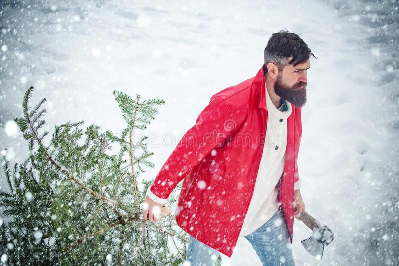A handsome lumber with a beard carries a Christmas tree. Winter emotion. Young man lumberjack is cutting Christmas tree. In the wood royalty free stock photos