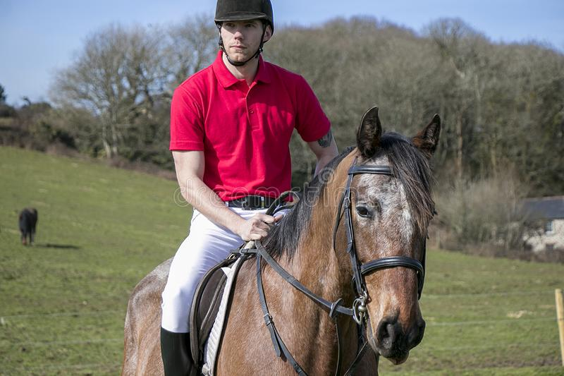 Handsome Male Horse Rider on horseback with white breeches, black boots and red polo shirt in green field with horses in distance royalty free stock photo