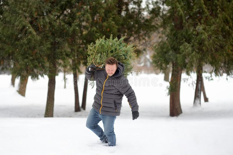 Handsome man bring a Christmas tree from winter forest overcoming snowdrifts and snowfall. Christmas holidays stock images
