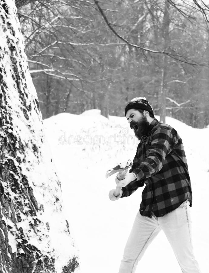 Handsome man or brutal lumberjack, bearded hipster, with beard and moustache in red checkered shirt cuts tree with axe. In snowy forest on winter day outdoors royalty free stock photography