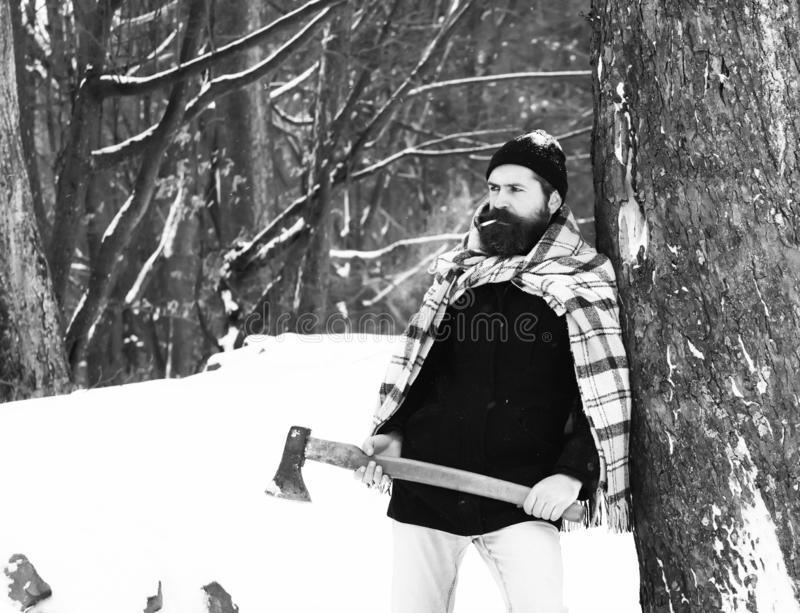 Handsome man or lumberjack, bearded hipster, with beard and moustache wrapped in plaid blanket stands with axe under. Tree in snowy forest on winter day stock photography