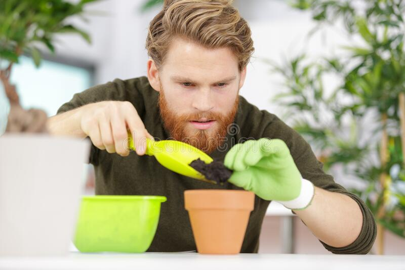 Handsome man taking care pots stock photos