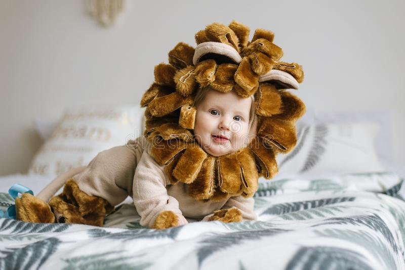 Handsome plump little child in a lion costume. stock image