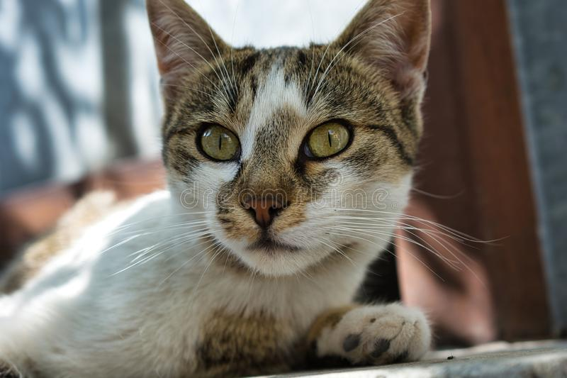 Handsome stray cat girl, close up image. Handsome stray cat girl, close up animal photography. Cute kitty face stock photo
