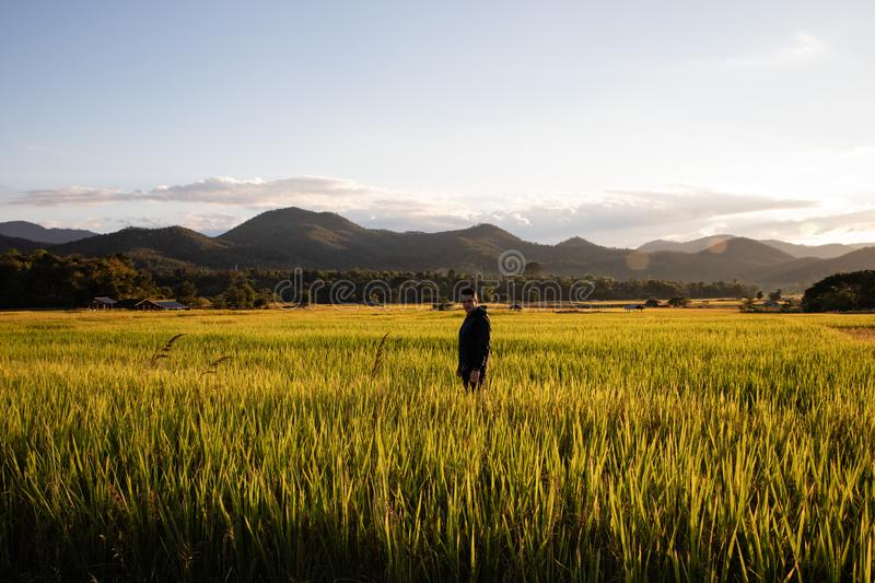 Handsome traveler man on rice fields in Thailand royalty free stock photos