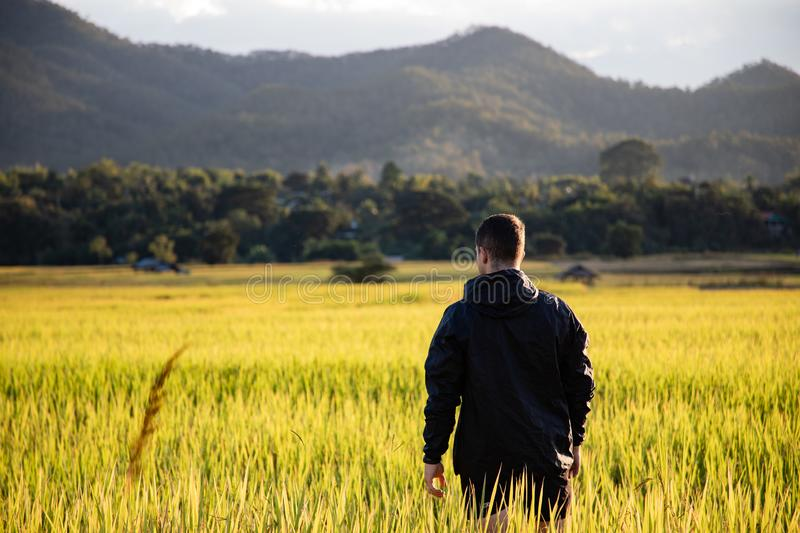 Handsome traveler man on rice fields in Thailand royalty free stock image
