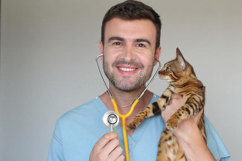 Handsome vet holding a cute bengal cat.  stock image