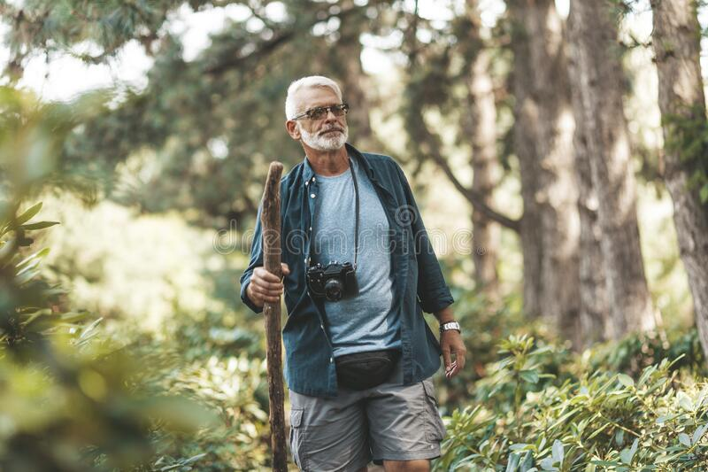 Handsome 60-year-old senior man walks through forest with stick and camera. Active lifestyle at retirement age. Amazing adventure stock photography