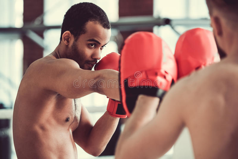 Handsome young boxers royalty free stock images