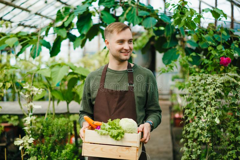 Handsome young farmer carrying box of fresh vegetables in greenhouse stock photo