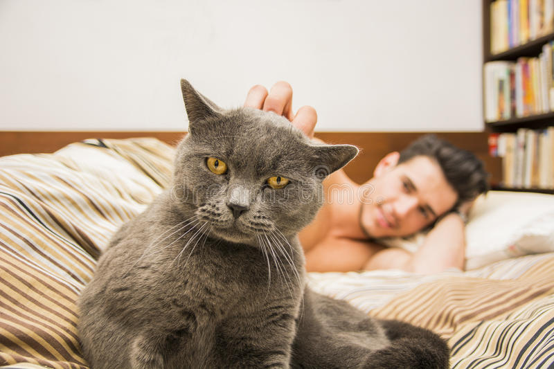 Handsome Young Man Cuddling his Gray Cat Pet. Handsome Young Animal-Lover Man on a Bed, Hugging and Cuddling his Gray Domestic Cat Pet stock image