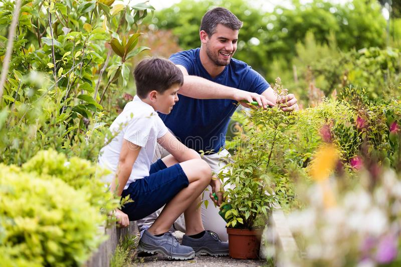 Handsome young man with his son planting flowers in the greenhouse. royalty free stock photo