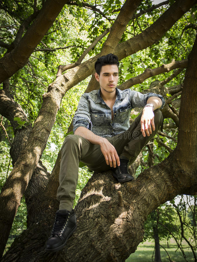 Handsome young man sitting on tree branches royalty free stock photos