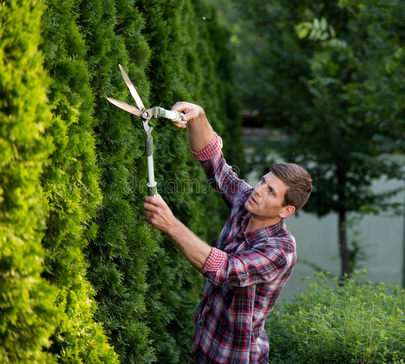 Man trimming bushes in garden stock photography