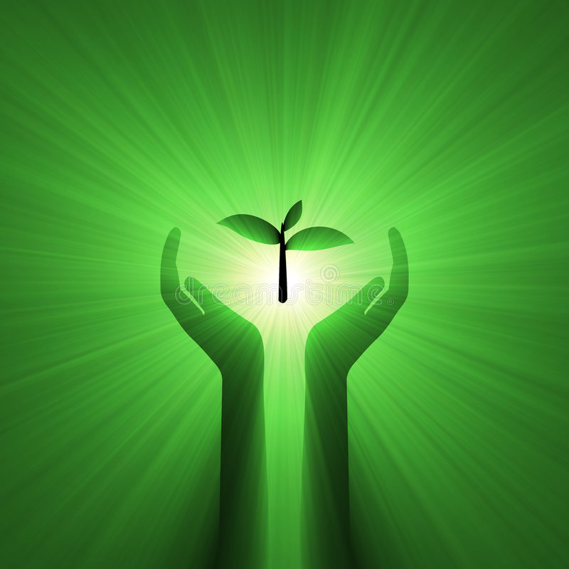 Handsorgfalt schützt Grünpflanze stock abbildung