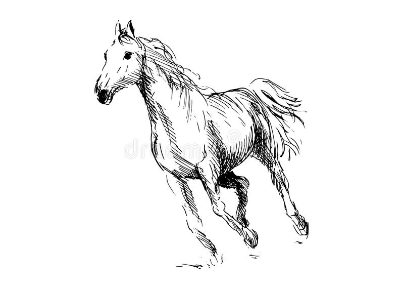 Handteckningshäst vektor illustrationer