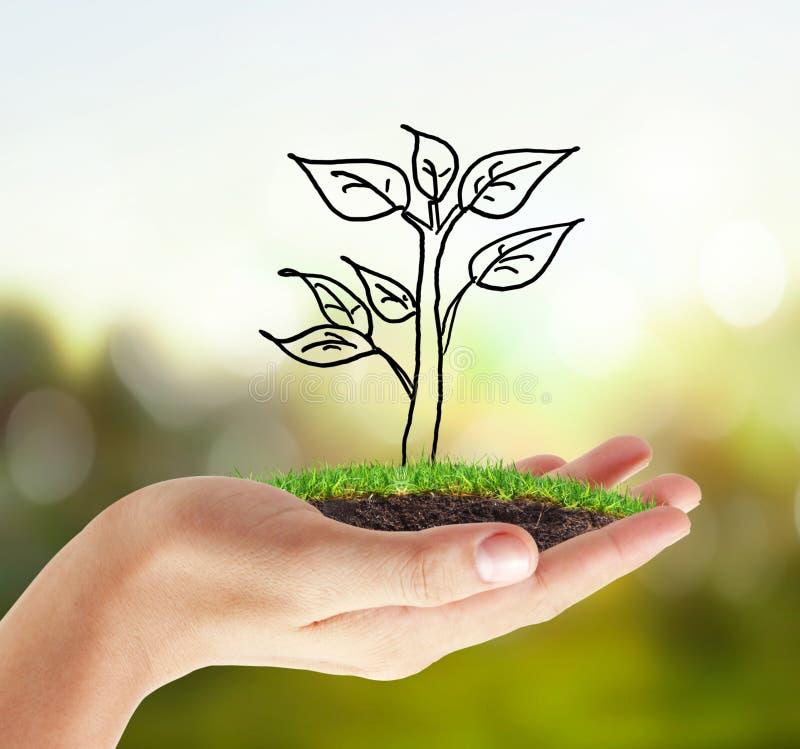 Handväxt, träd stock illustrationer