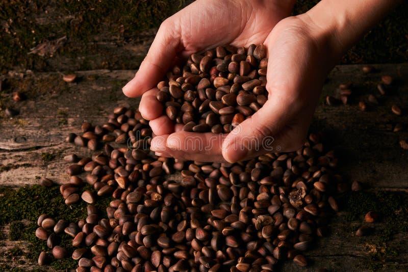 Handvol Siberische noten van de cederpijnboom stock afbeeldingen