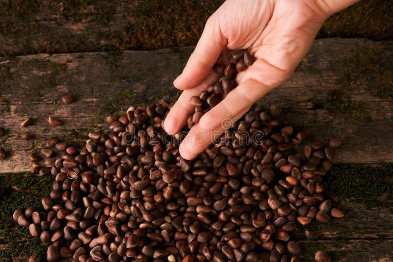 Handvol Siberische noten van de cederpijnboom royalty-vrije stock afbeeldingen