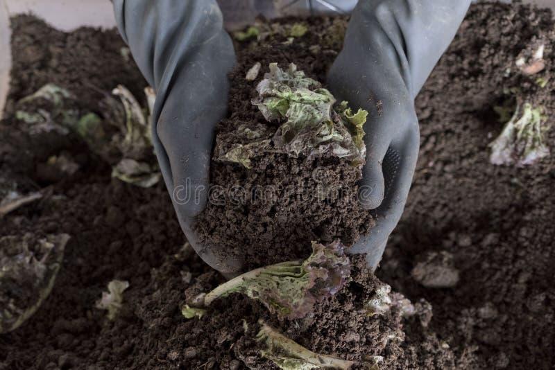 Handvoll Bodenkrume in den Händen des verantwortlichen Landwirts lizenzfreie stockfotografie