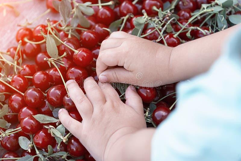 Handvoll Kirschen in der Hand stockbilder