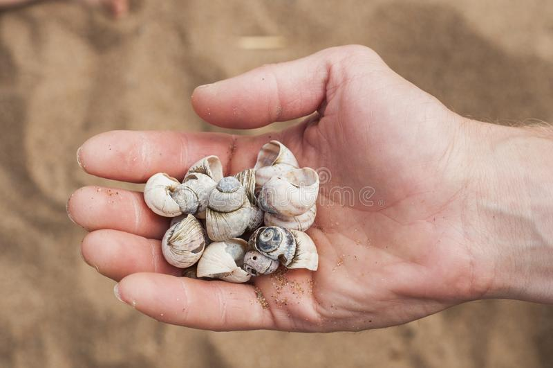 Handvoll Muscheln auf dem Hintergrund eines sandigen Strandes Details von Sommerferien lizenzfreies stockfoto