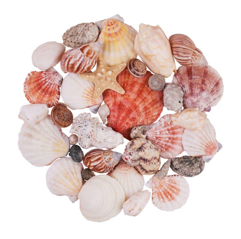 Handvoll Seashells und Starfish stockfoto