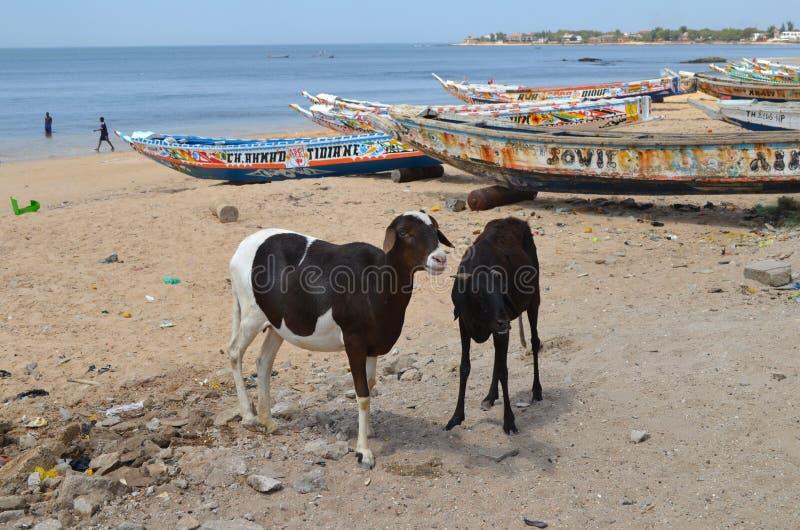 Handwerkliche hölzerne Fischerboote Pirogues im Dorf von Ngaparou, zierliches CÃ'te, Senegal stockfotografie