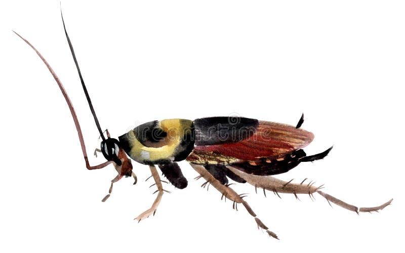 Handwork akwareli ilustracja insekta karakan ilustracji