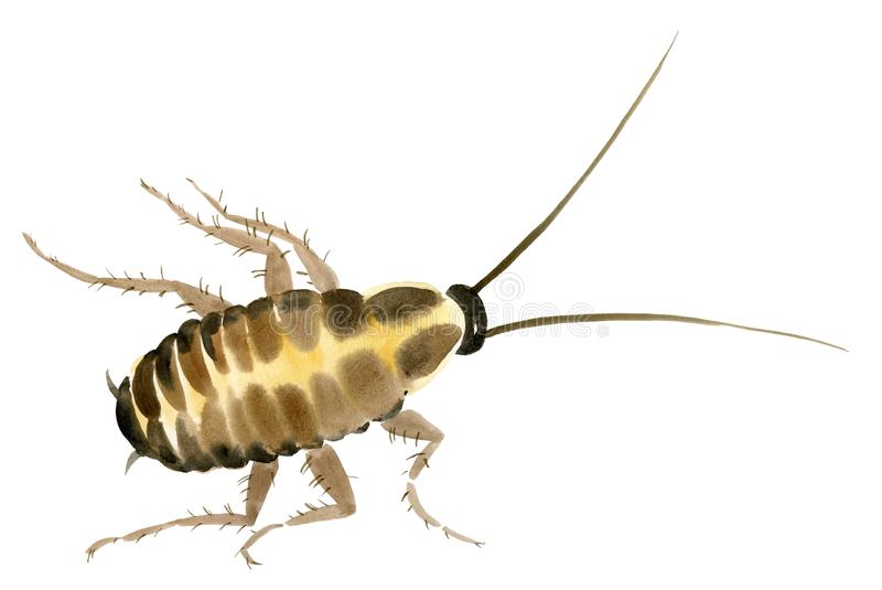 Handwork akwareli ilustracja insekta karakan ilustracja wektor