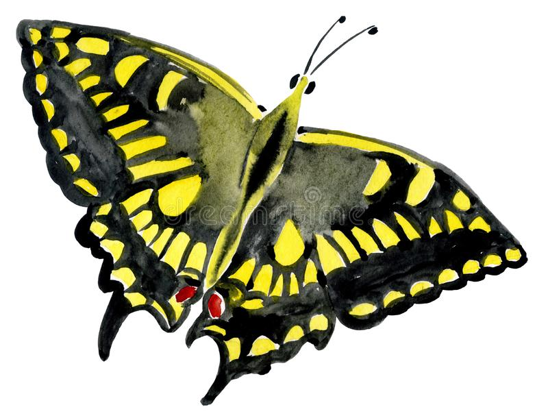 Handwork akwareli ilustracja insekta motyl ilustracji