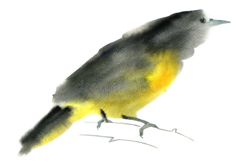 Watercolor illustration of a golden oriole bird vector illustration