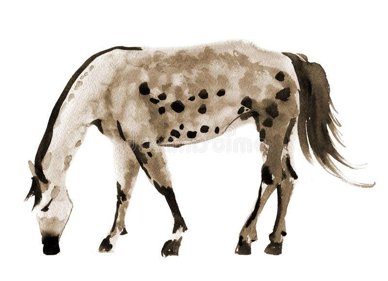 Watercolor illustration of a horse vector illustration