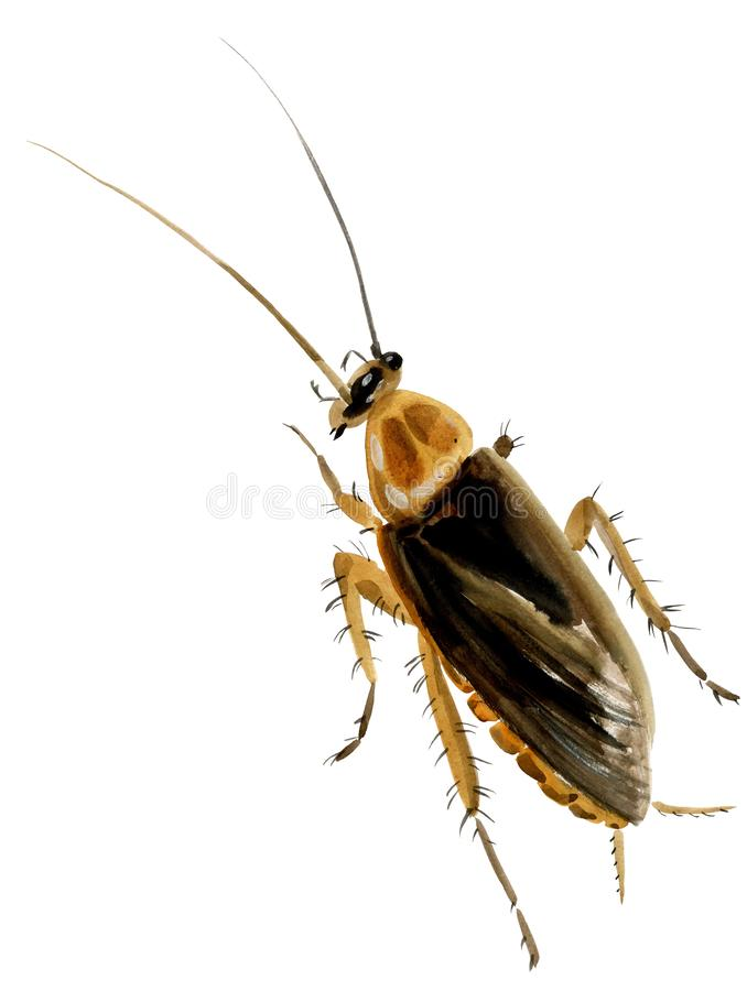 Free Handwork Watercolor Illustration Of An Insect Cockroach Stock Photo - 128695800