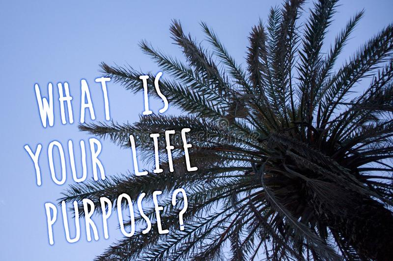 Handwriting text What Is Your Life Purpose Question. Concept meaning Personal Determination Aims Achieve Goal Tall palm tree blue. Sky ideas messages thoughts royalty free stock images
