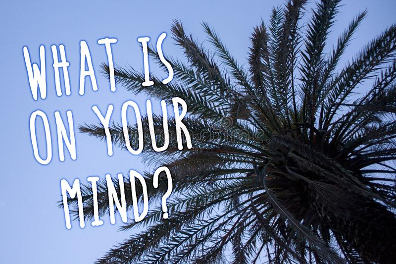 Handwriting text What Is On Your Mind Question. Concept meaning Open minded thinks of intellectual innovation Tall palm tree blue. Sky ideas messages thoughts stock images