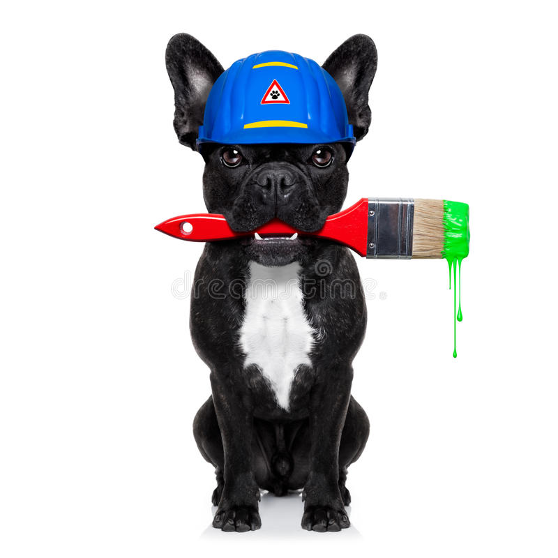 Handyman painter dog. Worker with paintbrush and ready to repair, fix or paint everything at home, isolated on white background royalty free stock photo