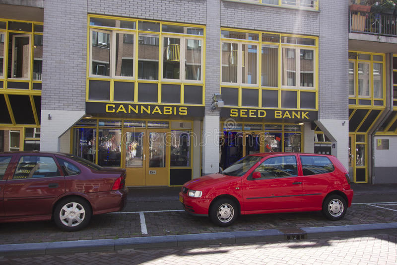 Hanf-Samen-Bank in Amsterdam stockbild