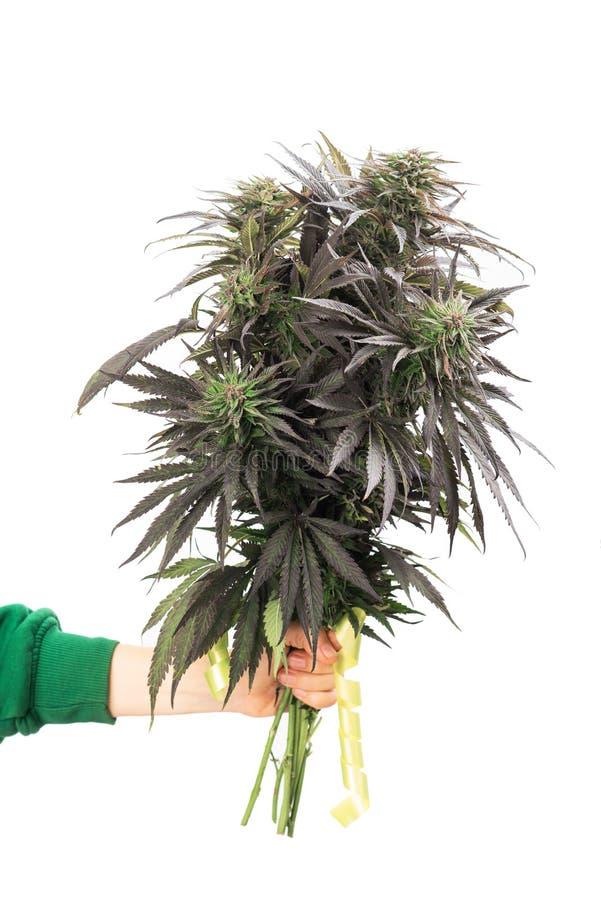 Hanfblumenstrauß in der Hand, Marihuanablumen lizenzfreie stockfotografie